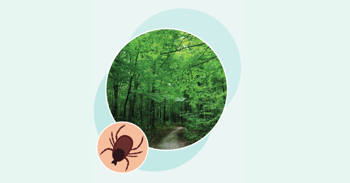 Maladie de Lyme et prévention des piqûres de tiques - La ...